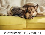 cat and dog lying together... | Shutterstock . vector #1177798741