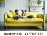adorable boy with welsh corgi... | Shutterstock . vector #1177804654