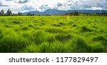 pastures food for livestock   Shutterstock . vector #1177829497