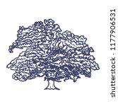 hand drawn big oak tree on... | Shutterstock .eps vector #1177906531