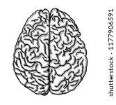 brain of human hrand drawn on... | Shutterstock .eps vector #1177906591