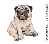 adorable beige puppy pug. humor ... | Shutterstock .eps vector #1177963324