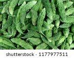 fresh harvested raw bitter... | Shutterstock . vector #1177977511
