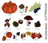 autumn crop hand drawn vector.... | Shutterstock .eps vector #1177994134