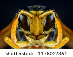 extreme close up macro scary... | Shutterstock . vector #1178022361