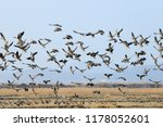 Migratory Birds That Feed On...