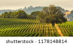 panorama of a vineyard with oak ... | Shutterstock . vector #1178148814