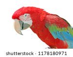 close up of red and green macaw ... | Shutterstock . vector #1178180971
