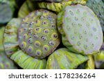 fresh lotus seed pod sale in... | Shutterstock . vector #1178236264