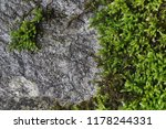 Green Moss On Slate Wall