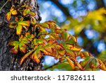 colorful leaves | Shutterstock . vector #117826111
