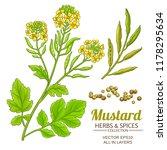 mustard plant vector | Shutterstock .eps vector #1178295634