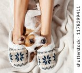 woman in slippers with dog.soft ... | Shutterstock . vector #1178299411