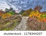 autumn heathland landscape with ...   Shutterstock . vector #1178344207