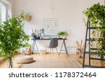 plants in white spacious home... | Shutterstock . vector #1178372464