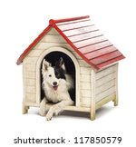 Border Collie In A Kennel...