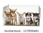 Stock photo chihuahuas in cage against white background 117850681