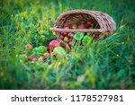 harvest vegetables in the basket   Shutterstock . vector #1178527981