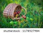 harvest vegetables in the basket   Shutterstock . vector #1178527984