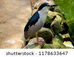 nice bird in bannerghatta forest | Shutterstock . vector #1178633647