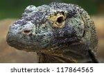 Close-up view of a Komodo dragon (Varanus komodoensis) - stock photo