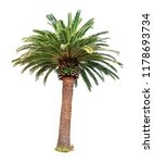 Big Palm Tree Isolated On Whit...