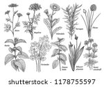 herbs  spices  plants... | Shutterstock .eps vector #1178755597