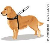 guide dog retriever   Shutterstock .eps vector #1178762707
