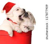 Playful Christmas Santa Puppie...