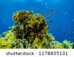coral reefs and water plants in ... | Shutterstock . vector #1178855131