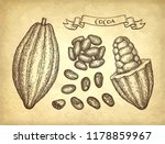cocoa pods and beans. ink... | Shutterstock .eps vector #1178859967