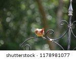 cute  tiny female cardinal bird ... | Shutterstock . vector #1178981077