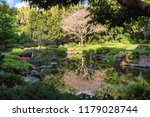 japanese gardens at mount coot...   Shutterstock . vector #1179028744