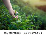 asian woman hand picking up the ... | Shutterstock . vector #1179196531