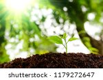 seedling are growing in the... | Shutterstock . vector #1179272647