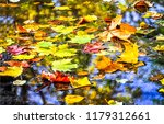 Autumn Maple Leaves In Puddle...
