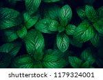green mint leaves pattern... | Shutterstock . vector #1179324001