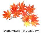 autumn maple leaves | Shutterstock . vector #1179332194