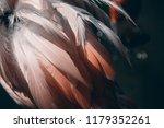 pink disheveled flamingo... | Shutterstock . vector #1179352261