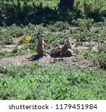 A Family Of Prairie Dogs...