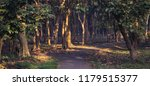 panoramic image of a path... | Shutterstock . vector #1179515377