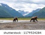 Grizzly Bear (Ursus arctos horribilis) cubs walking on beach, Lake Clark National Park, Alaska