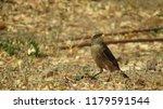 a passerine's summer | Shutterstock . vector #1179591544