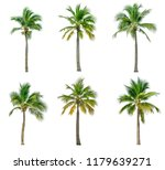 Coconut Palm Tree Isolated White - Fine Art prints