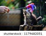 close up a playful black ticked ... | Shutterstock . vector #1179682051