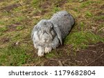 Small photo of wild rabbit on the grass