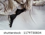 black bra on bed with grey... | Shutterstock . vector #1179730834