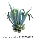 agave with blue leaves isolated ... | Shutterstock . vector #1179754927