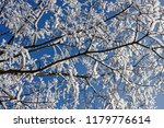 Background Of Tree Branches...