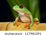 Small photo of flying or gliding tree frog Agalychnis spurrelli lives in Amazon rain forest of Ecuador Colombia Panama and Costa Rica tropical nocturnal treefrog and endangered amphibian